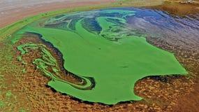 Alghe verdi sulla superficie del fiume Immagine Stock