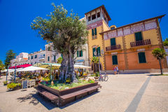 Alghero old city center with olive tree and colorful houses, Alghero, Sardinia, Italy, Europe. Royalty Free Stock Image