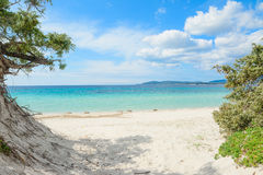 Alghero shore on a clear spring day Royalty Free Stock Photo