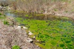 algi Obrazy Stock