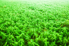 Algi używać dla oczyszczania wody Fotografia Stock