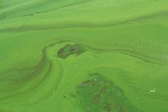 Algi zanieczyszczali wodę rzeczną na rzece Zdjęcie Royalty Free