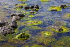 Algi zanieczyszczona woda Zdjęcia Royalty Free