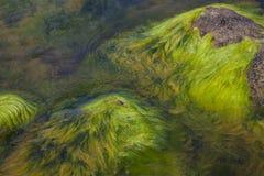 Algi zanieczyszczona woda Obraz Stock