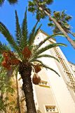 Algiers. Different palm trees used for ornamentation in Algiers, Algeria stock images