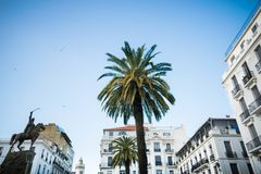 Palm tree in algiers city. Low-angle-view of algier royalty free stock images