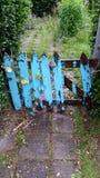 Algo azul Imagenes de archivo