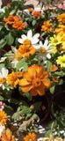 Algo de diversa flor fotografía de archivo