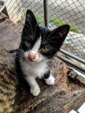 Algo inusual para un gato está mirando fijamente sospechoso Foto de archivo libre de regalías