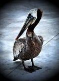 Algo pájaro grande tímido Fotografía de archivo