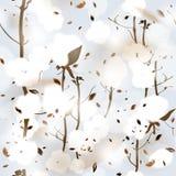 algodão Foto de Stock Royalty Free