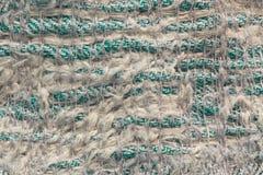 algodão Fotos de Stock