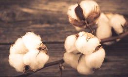 algodão Fotografia de Stock