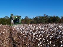 Algodão da colheita Foto de Stock Royalty Free