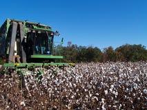 Algodão da colheita Imagem de Stock Royalty Free