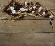 Algodão e trigo em um fundo de madeira Fotografia de Stock