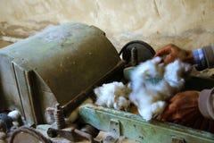 algodón Fotografía de archivo