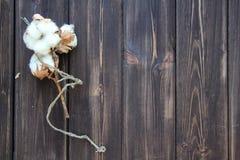Algodón en la tabla de madera Foto de archivo libre de regalías