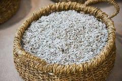 Algodón orgánico mullido blanco escogido en la cesta de mimbre, primer imagenes de archivo
