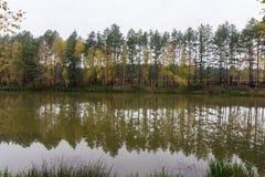 algonquin δασικό λιμνών του Καναδά φθινοπώρου Οντάριο πάρκο Οκτωβρίου επαρχιακό Στοκ Εικόνα