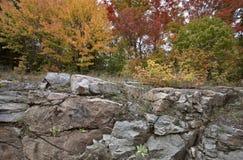 Algonquin πάρκο Muskoka Οντάριο Στοκ Εικόνες