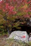 Algonquin πάρκο Muskoka Οντάριο Στοκ φωτογραφία με δικαίωμα ελεύθερης χρήσης