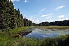 algonquin πλήρης λίμνη πάρκων lilys στοκ εικόνα με δικαίωμα ελεύθερης χρήσης