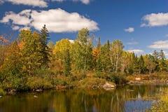 Algonquin de Herfst van het Park Royalty-vrije Stock Foto's