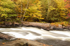 Algonquin Park River Stock Photos