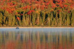 Algonquin Reflections Stock Photography