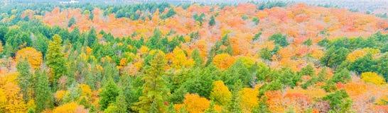 Algonquin van dalingskleuren Park, Ontario, Canada Stock Foto