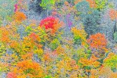 Algonquin van dalingskleuren Park, Ontario, Canada Stock Foto's