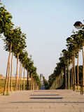 Algorta's lined up tree walkway. And alone walker(s royalty free stock images