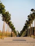Algortas ausgerichteter Baum walway Lizenzfreie Stockbilder