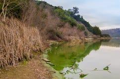 Algträsk på sjön Chabot Royaltyfri Foto
