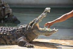 Alguém que toma o dinheiro na boca do crocodilo imagem de stock