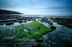 Algue à la baie de Dunraven Photos stock