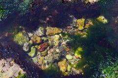 Algue à la plage photo stock