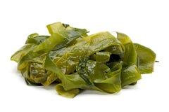 Algue photos stock