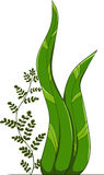 algue Photographie stock libre de droits