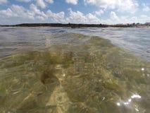 Algue alla marea del pellame immagini stock