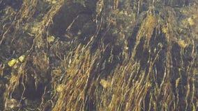 Algue au fond de la rivière banque de vidéos