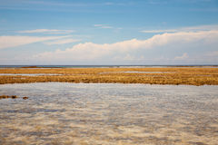 Algue de plage de Ritidian en Guam Image libre de droits