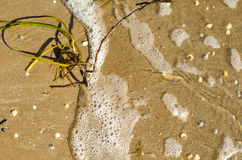 Algue, eau de mer avec la mousse et coquilles sur le sable photo stock