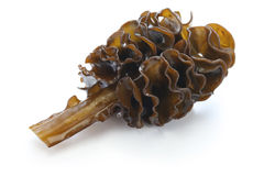 Algue japonaise, mekabu, racine de wakame image stock