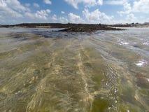 Algue på skinntidvatten Royaltyfri Bild