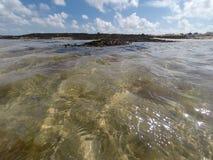 Algue på skinntidvatten Royaltyfri Fotografi