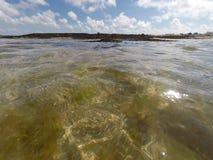Algue på skinntidvatten Arkivbilder