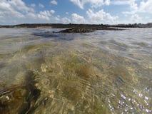 Algue przy kryjówka przypływem Zdjęcia Royalty Free