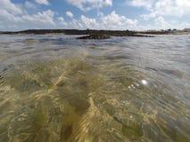 Algue przy kryjówka przypływem Zdjęcie Royalty Free